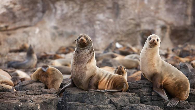 Seal Rock,  Phillip Island