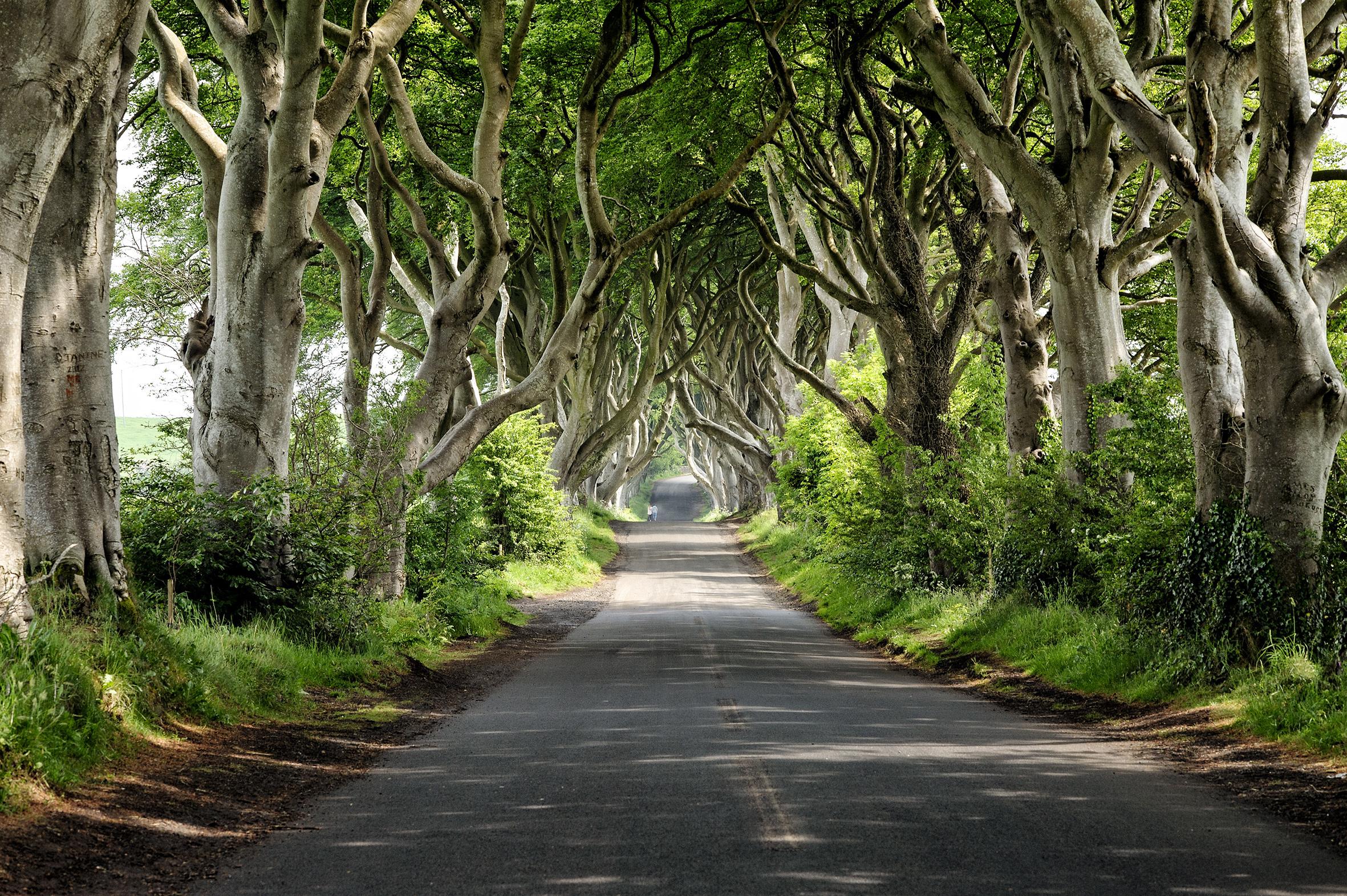 Northern Ireland, Dark Hedges