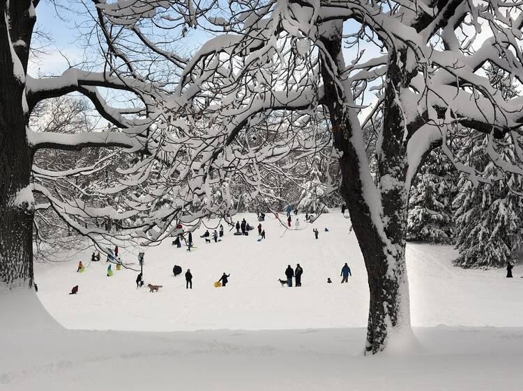 Central Park, Cedar Hill