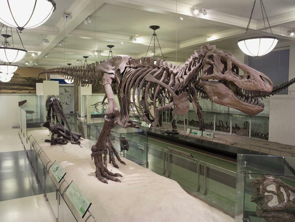 Tyrannosaurus Rex, 4th floor halls