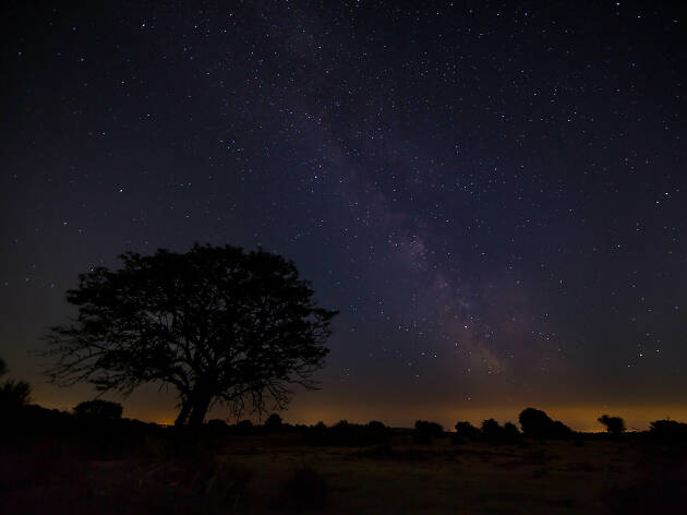 The New Forest, stargazing, Hampshire