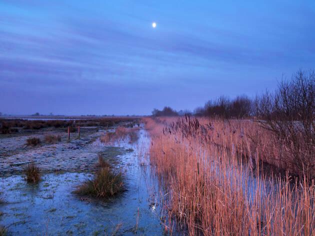 Evening at Bakers Fen, Wicken Fen National Nature Reserve, Cambridgeshire