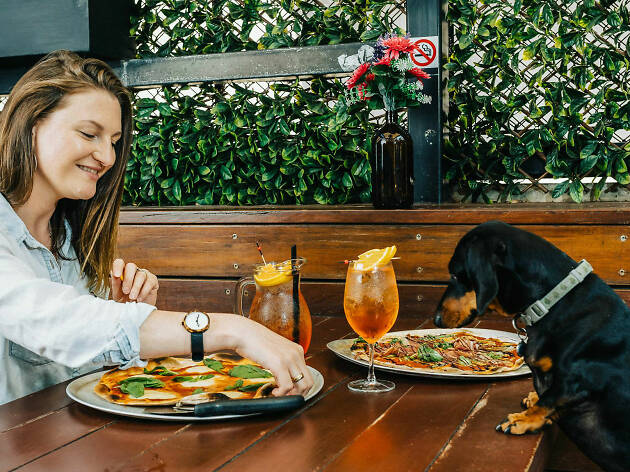 The Newmarket Doggy Date Night