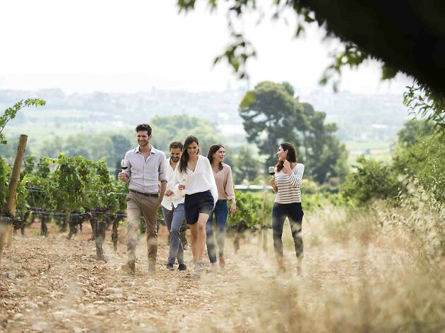 Visita al celler Familia Torres amb maridatge de vins i pernils