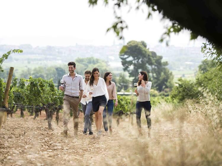 Beveu-vos el món del vi amb aquestes experiències úniques!
