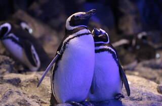 恋する水族館 Sweet Penguins