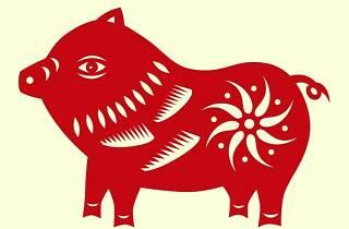 Any nou xinès. Any del porc