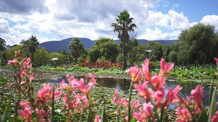 Blue Lotus Garden