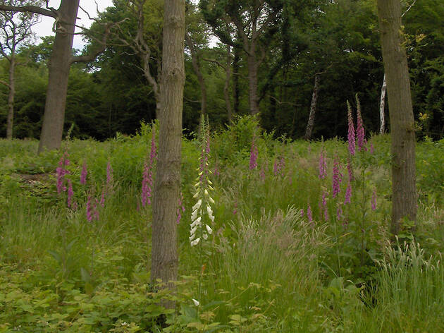Ruislip Woods for Ruislip Nature Reserve, press 2019