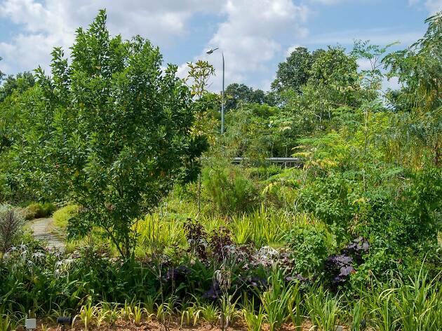 Edible Garden City Things To Do In Tanglin Singapore