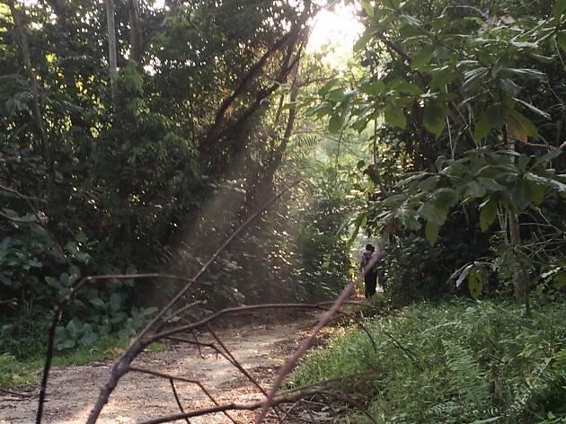 Mandai trail