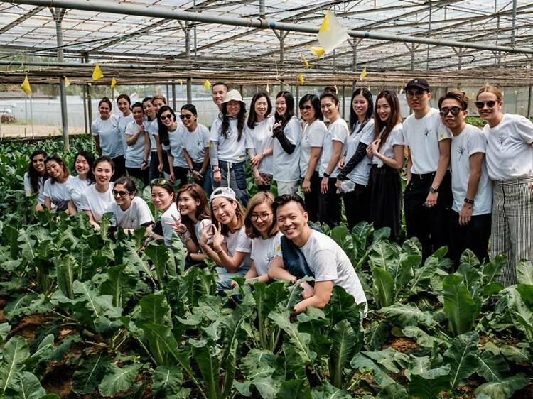 有心機 Zen Organic Farm:即採即吃