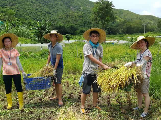 香港避世必去農莊