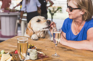 Pooches and Prosecco