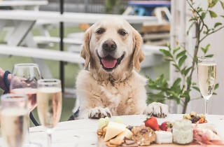 Pooches and Prosecco The Ascot Lot