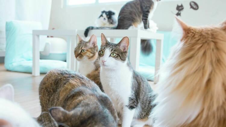貓の茶房 The Cats Tearoom
