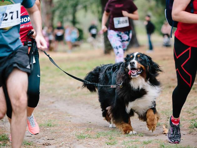 Run to the Dog
