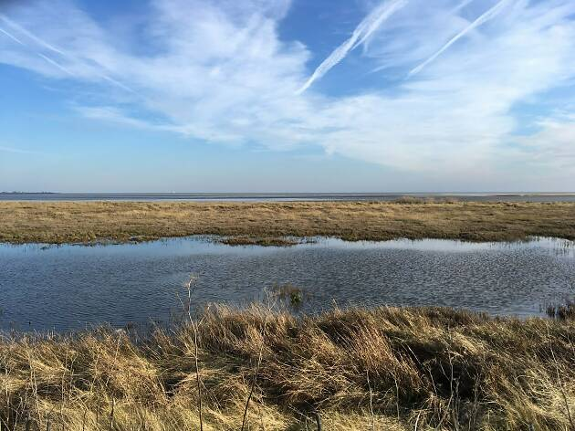 Sandwich & Pegwell Bay National Nature Reserve.