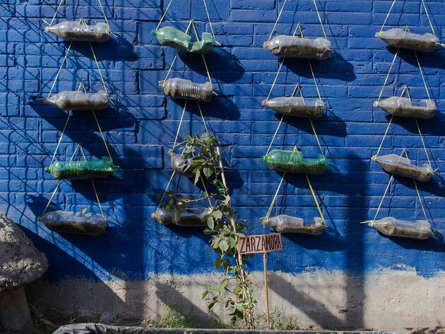 Huerto Urbano Acatitlan (Foto: Mattza Tobón)