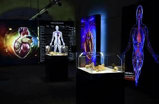 'Corpo Humano - A Ciência da Vida'