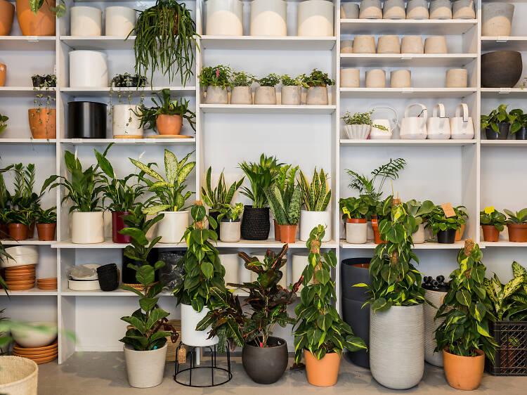 Os melhores sítios para comprar plantas em Lisboa