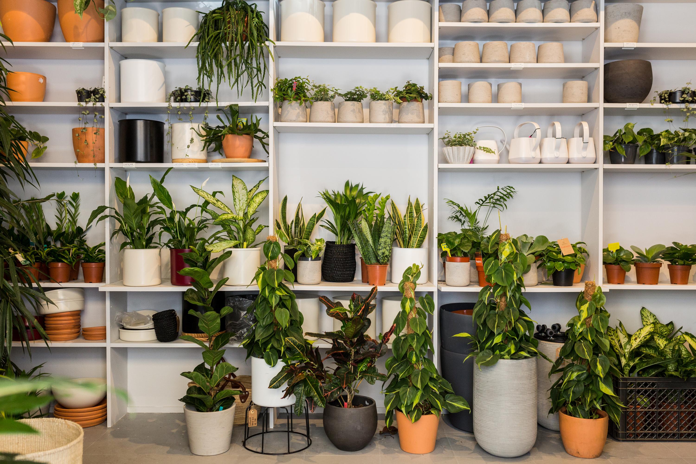 Sete plantas para ter em casa e como cuidar delas