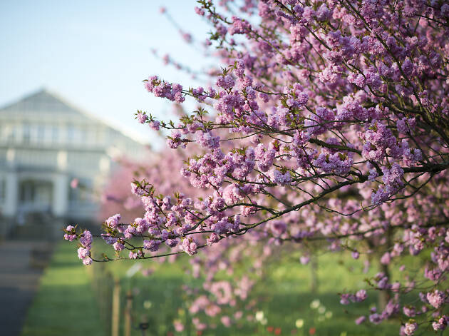 The best places to see spring flowers