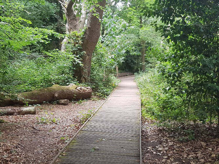 See the inspiration for 'The Lord of the Rings' at Moseley Bog