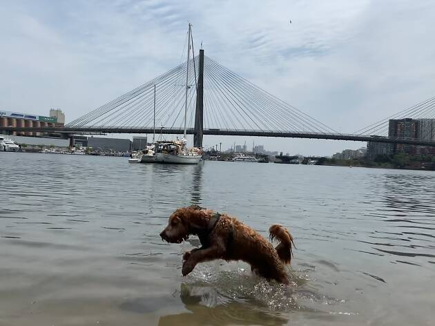 Perro jumps in the water at the dog beach at Federal Park.