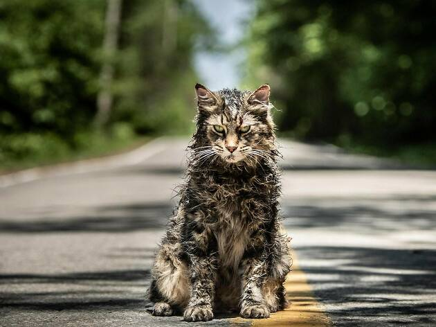 A zombie cat in Pet Sematary movie