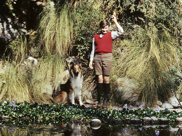 30 Best Animal Movies To Watch As a Family