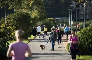 People walking dogs.