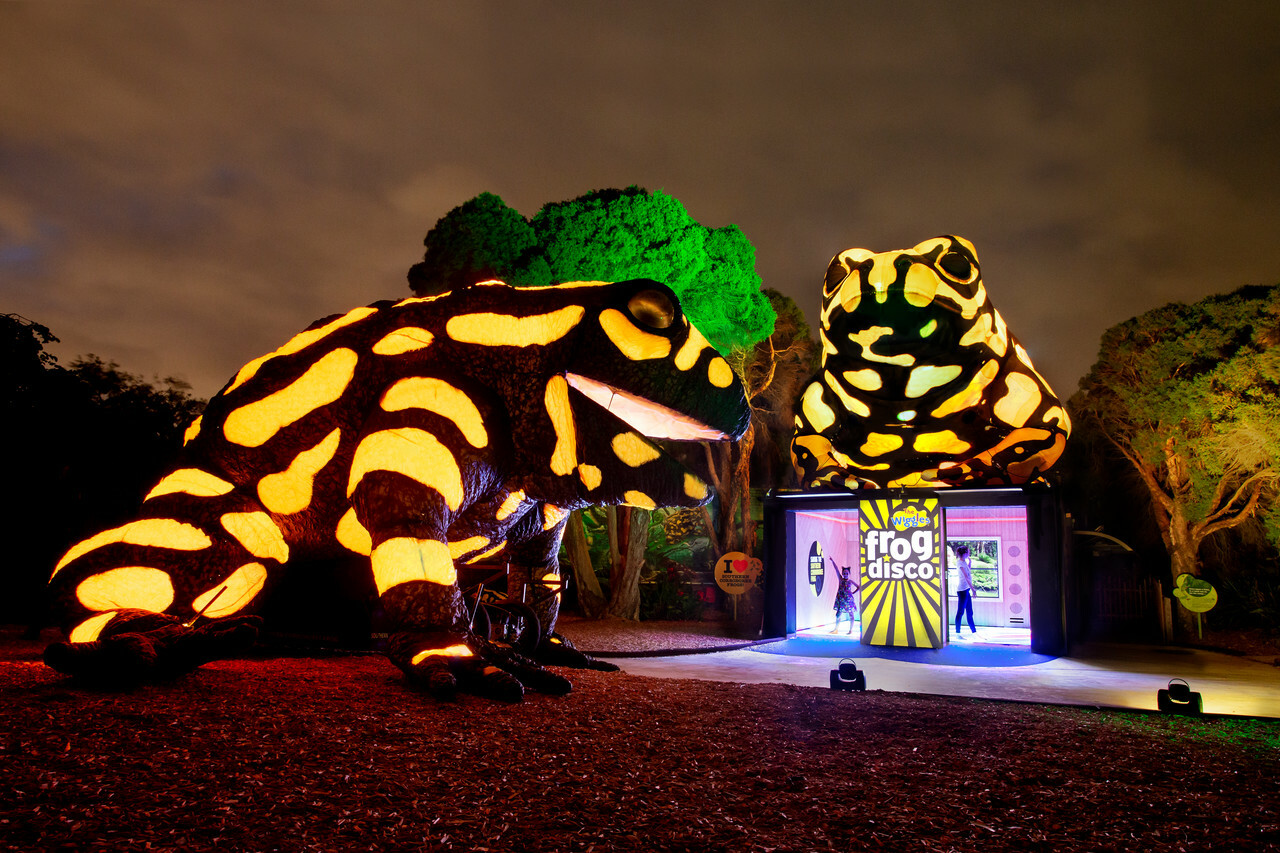 Two giant neon corroboree frogs at Melbourne Zoo