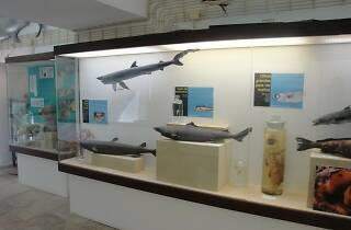 Museu Oceanográfico