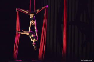 Gala Solidària de circ