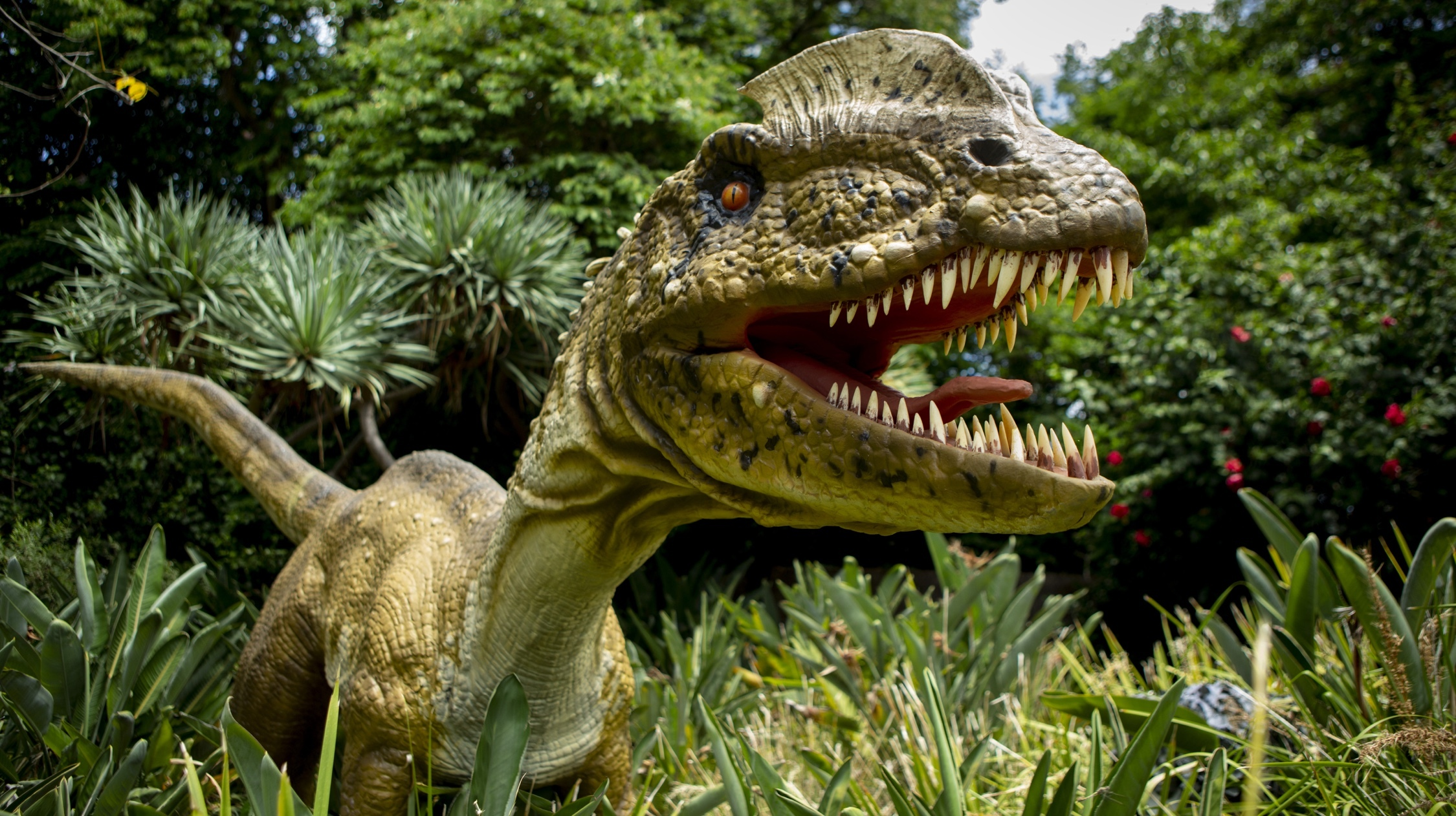 Carnivore dinosaur at Melbourne Zoo