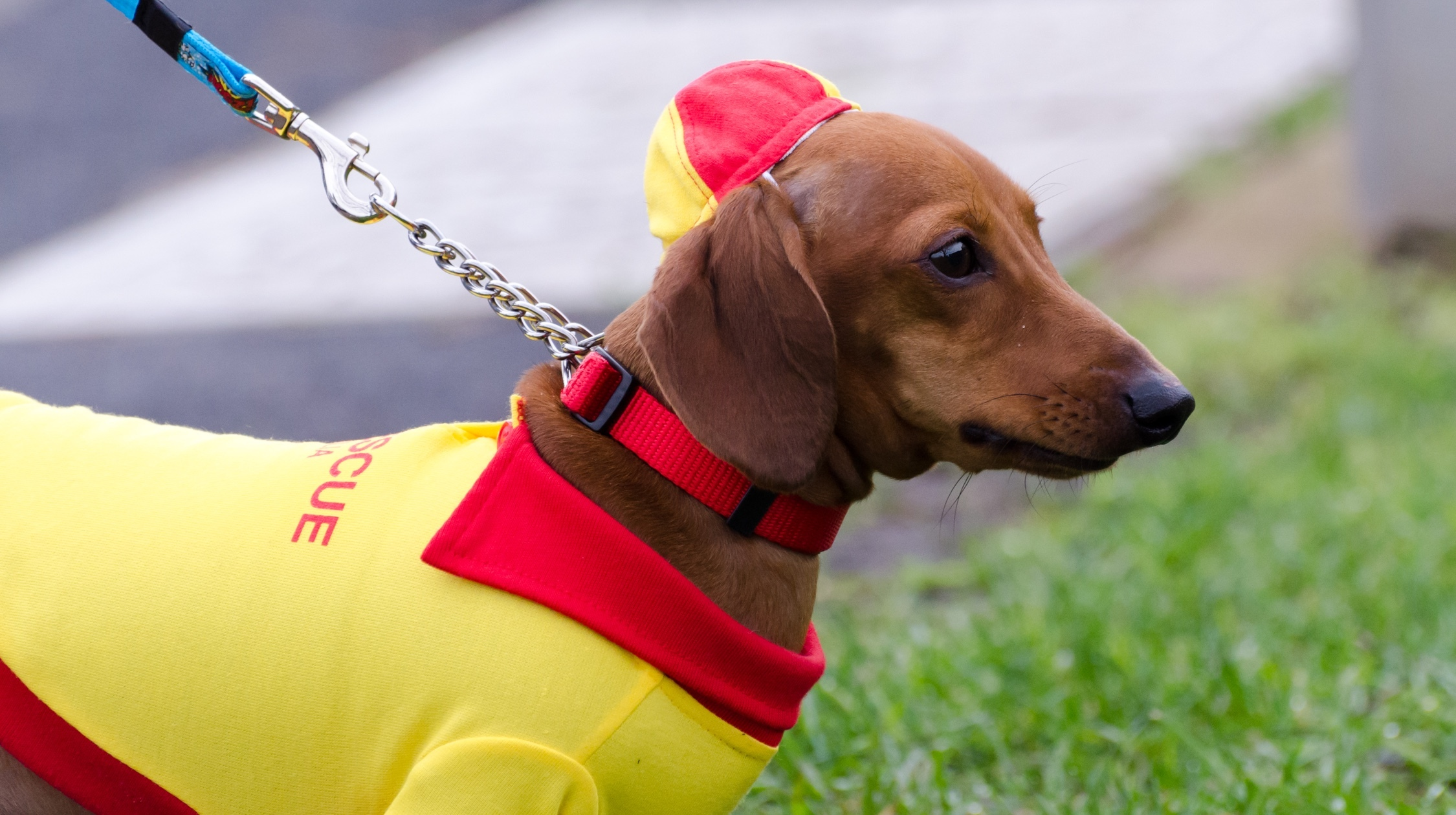 Generous Creative Pet Dog Hot Dog Costume Clothes Hamburger Cat Clothes Outfit For Small Medium Large Dog Novelty Winter Warm Clothes 2019 Official Home & Garden Pet Products
