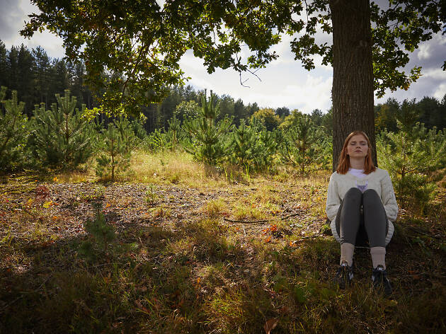 Forest bathing at Forest Holidays