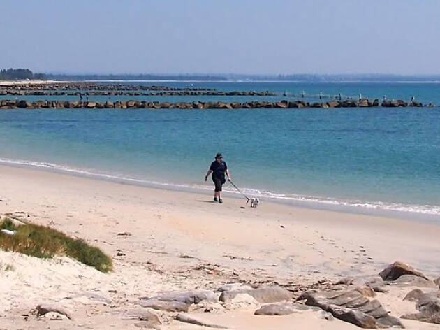 Person walking their dog along beach at Silvers Beach Kurnell