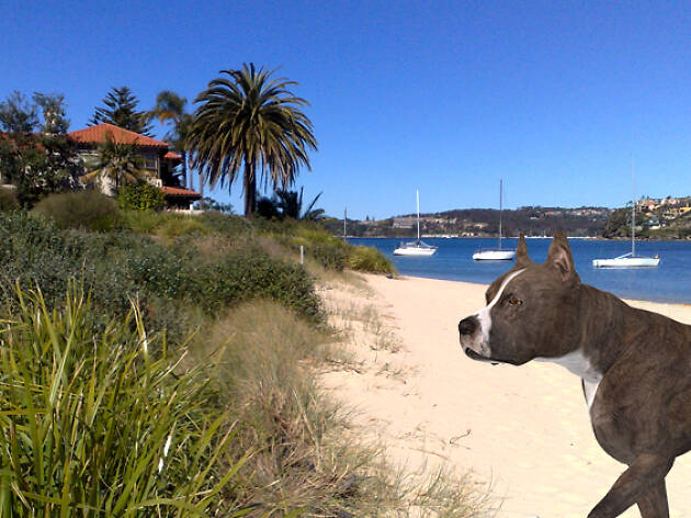 Dog standing on beach at Clontarf Beach Sydney