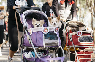 The Million Paws Walk (Photograph: Supplied)