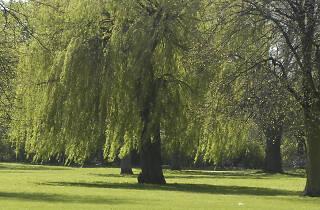 Wandle Park Croydon