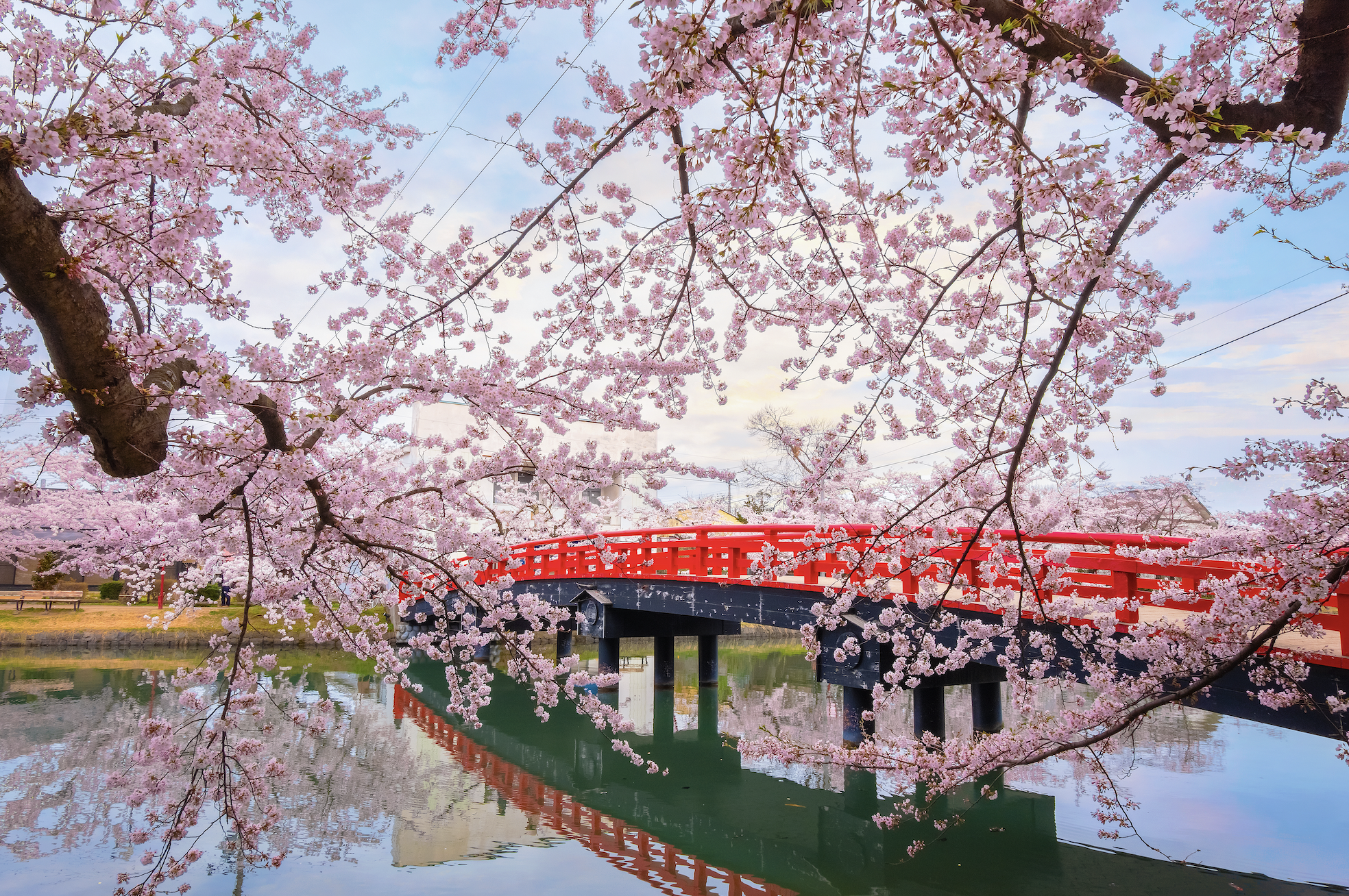 The best places to see cherry blossoms in Japan – outside of Tokyo