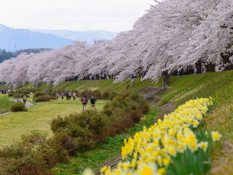 Apr 11-16, Akita
