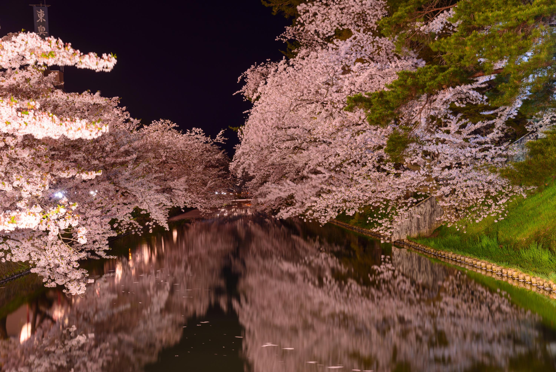 Cherry blossoms and Hirosaki Park Aomori