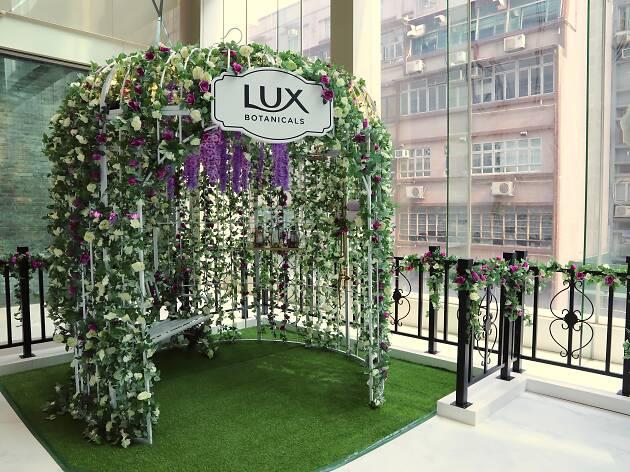 lux pop-up
