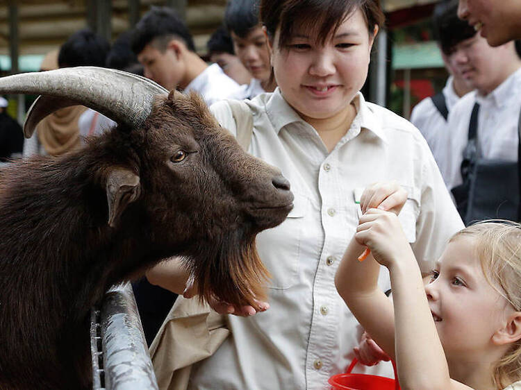 Be a zookeeper at Singapore Zoo