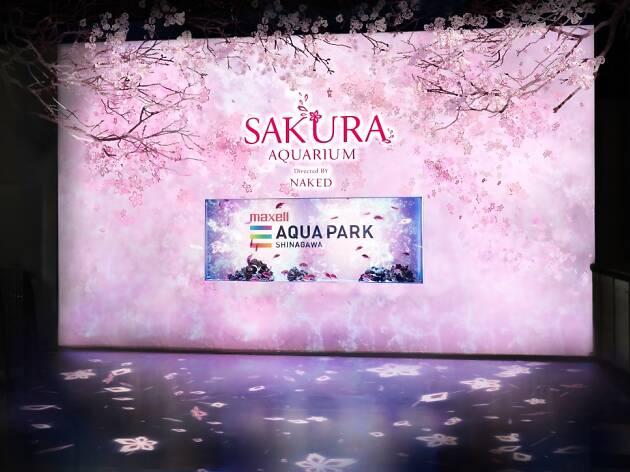 Sakura Aquarium