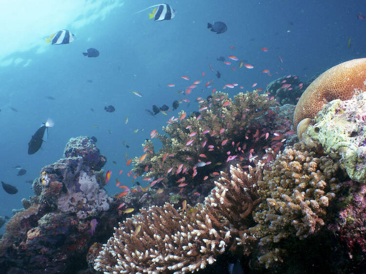 Dive at the only oceanic island in Malaysia