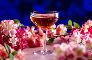 sexy fish bar, cherry blossom pop-up